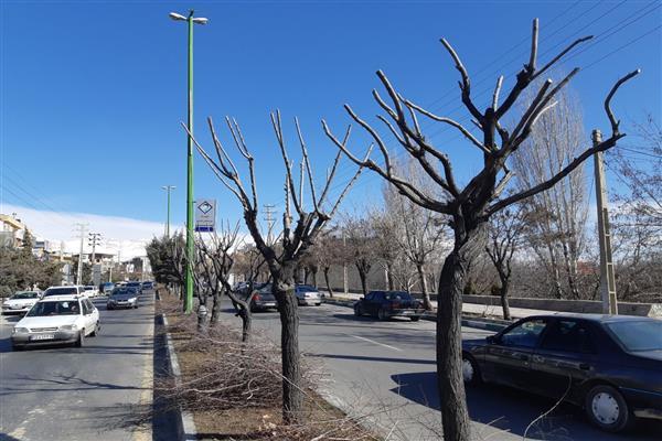 با شروع فصل سرما؛ هرس زمستانه درختان شهر دماوند آغاز شد