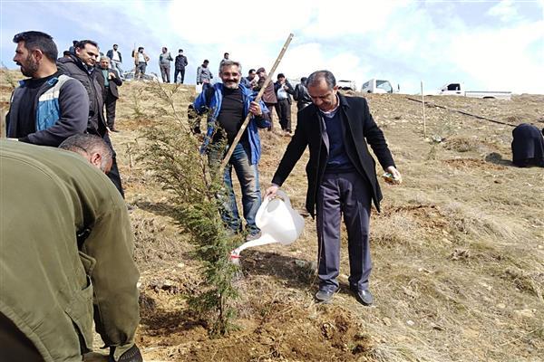 400 اصله نهال در منطقه گردشگری چشمهاعلا غرس شد